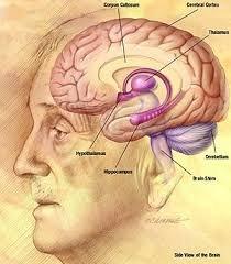 Screenshot for فلش کارت آناتومی عصبی