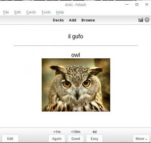 Screenshot for فلش کارت نام حیوانات در زبان ایتالیایی